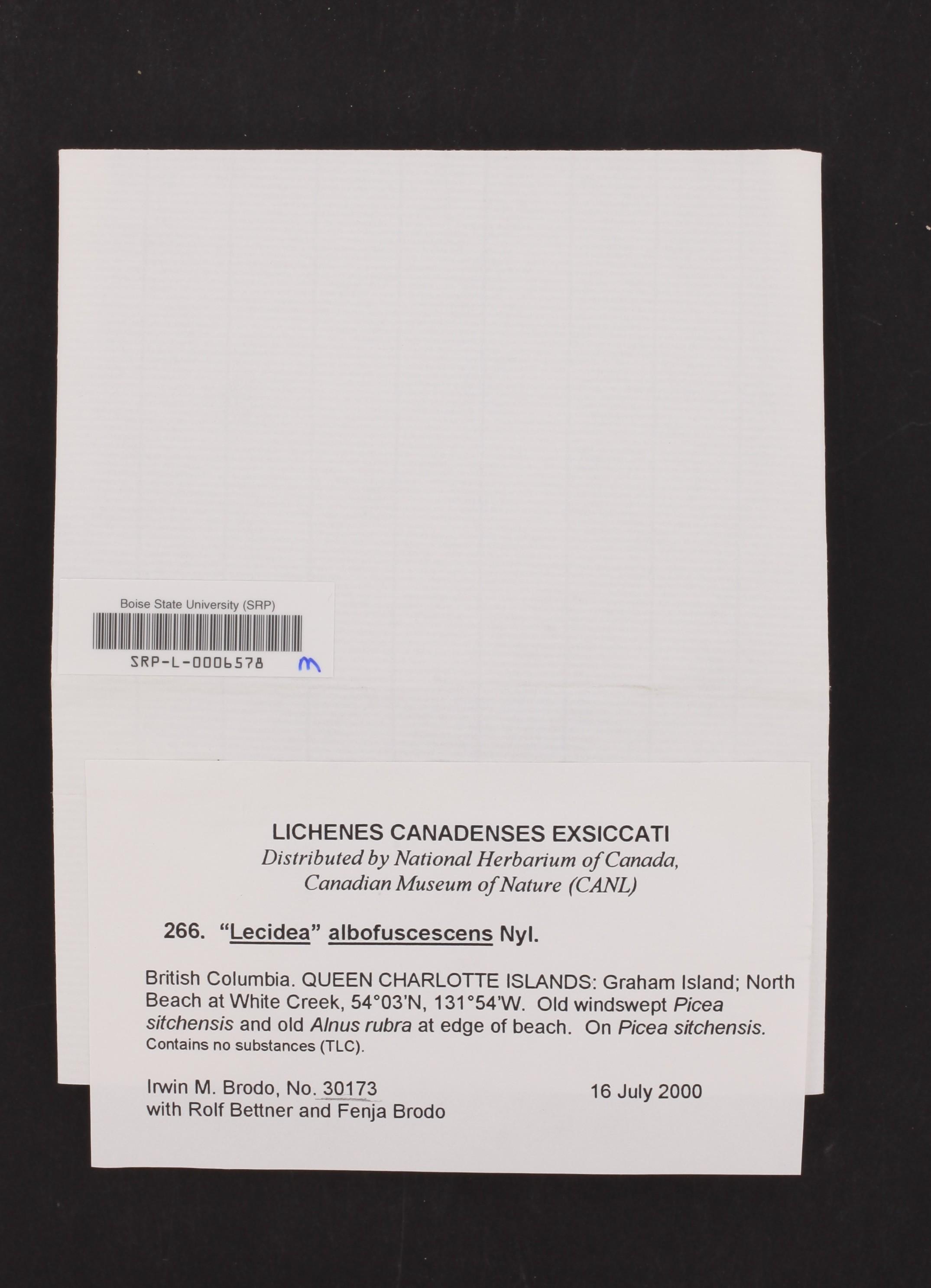 Lecidea albofuscescens image