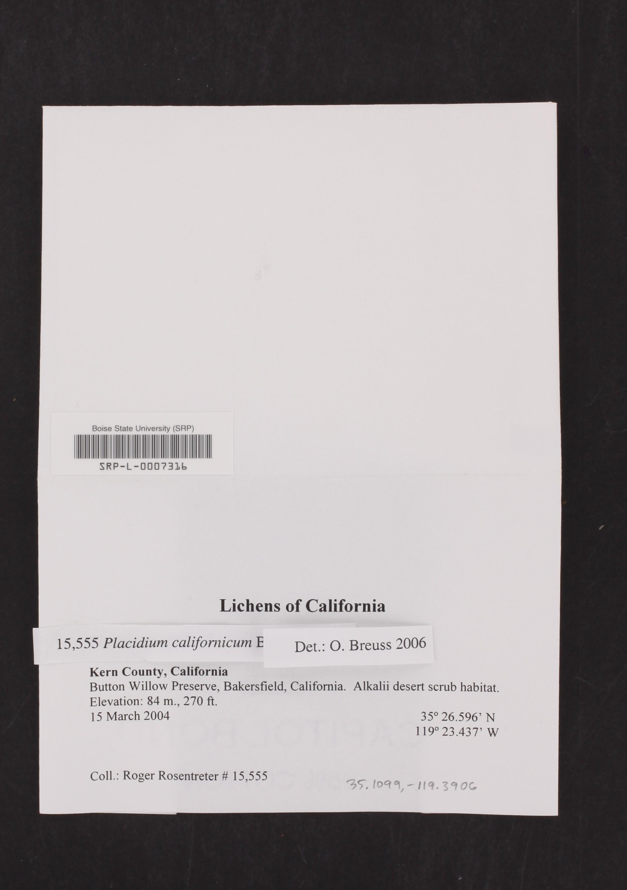 Placidium californicum image