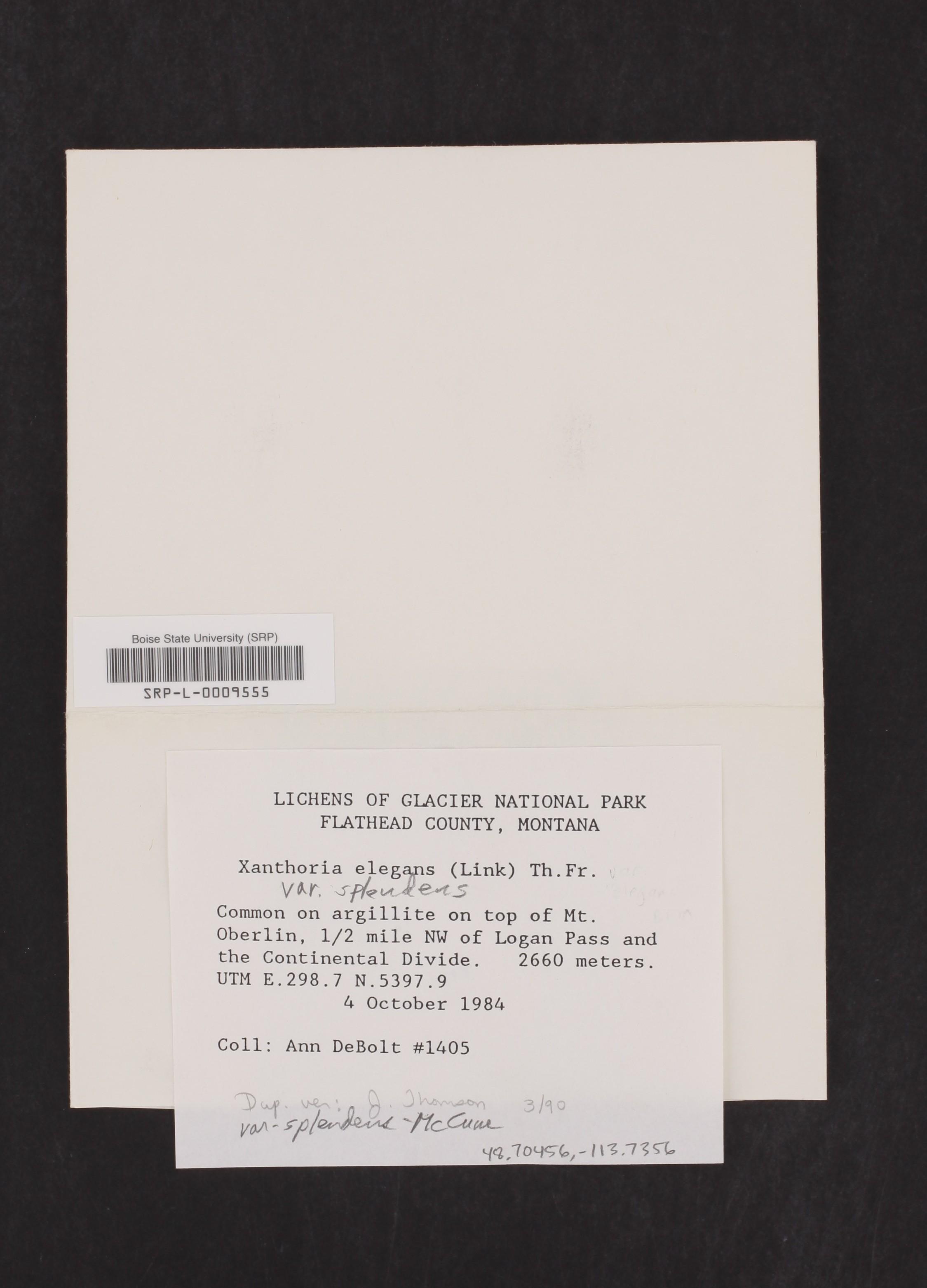 Xanthoria elegans var. splendens image