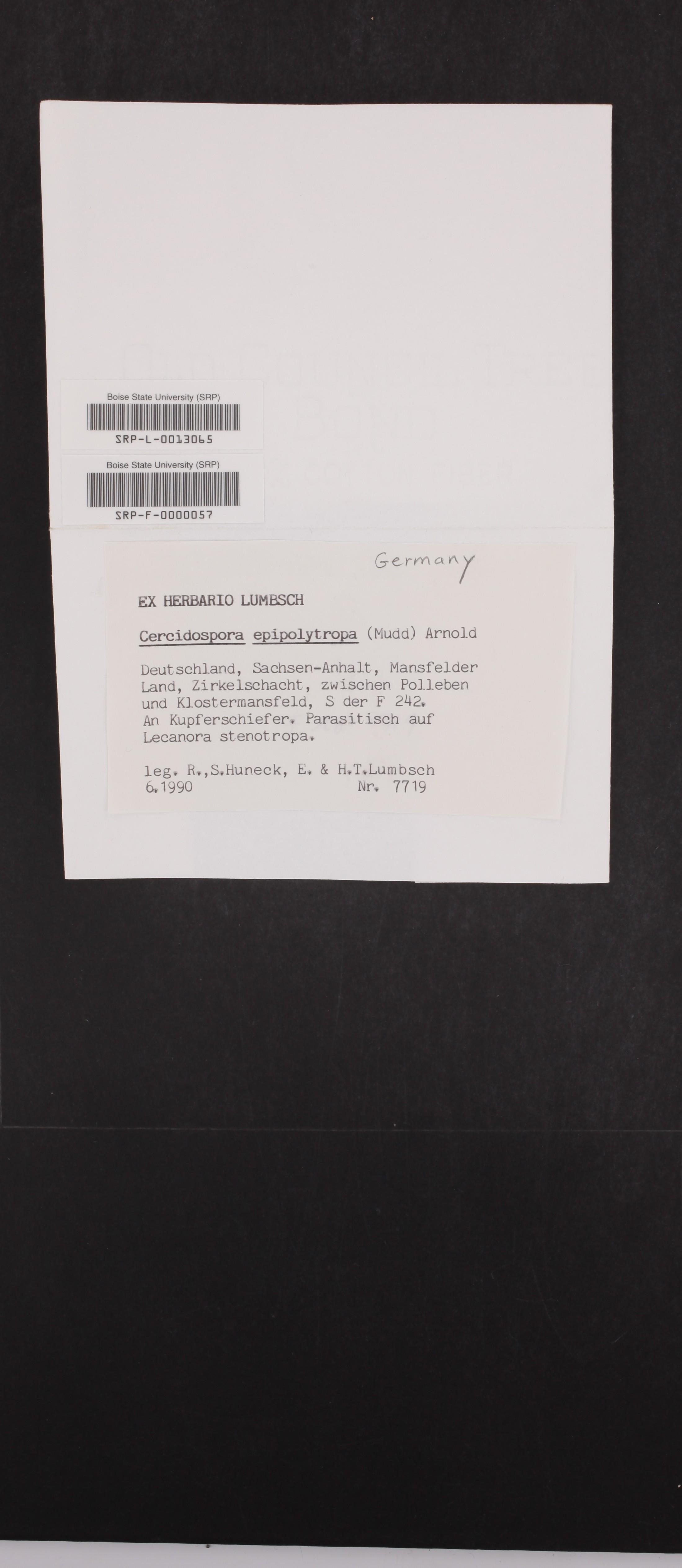 Cercidospora epipolytropa image