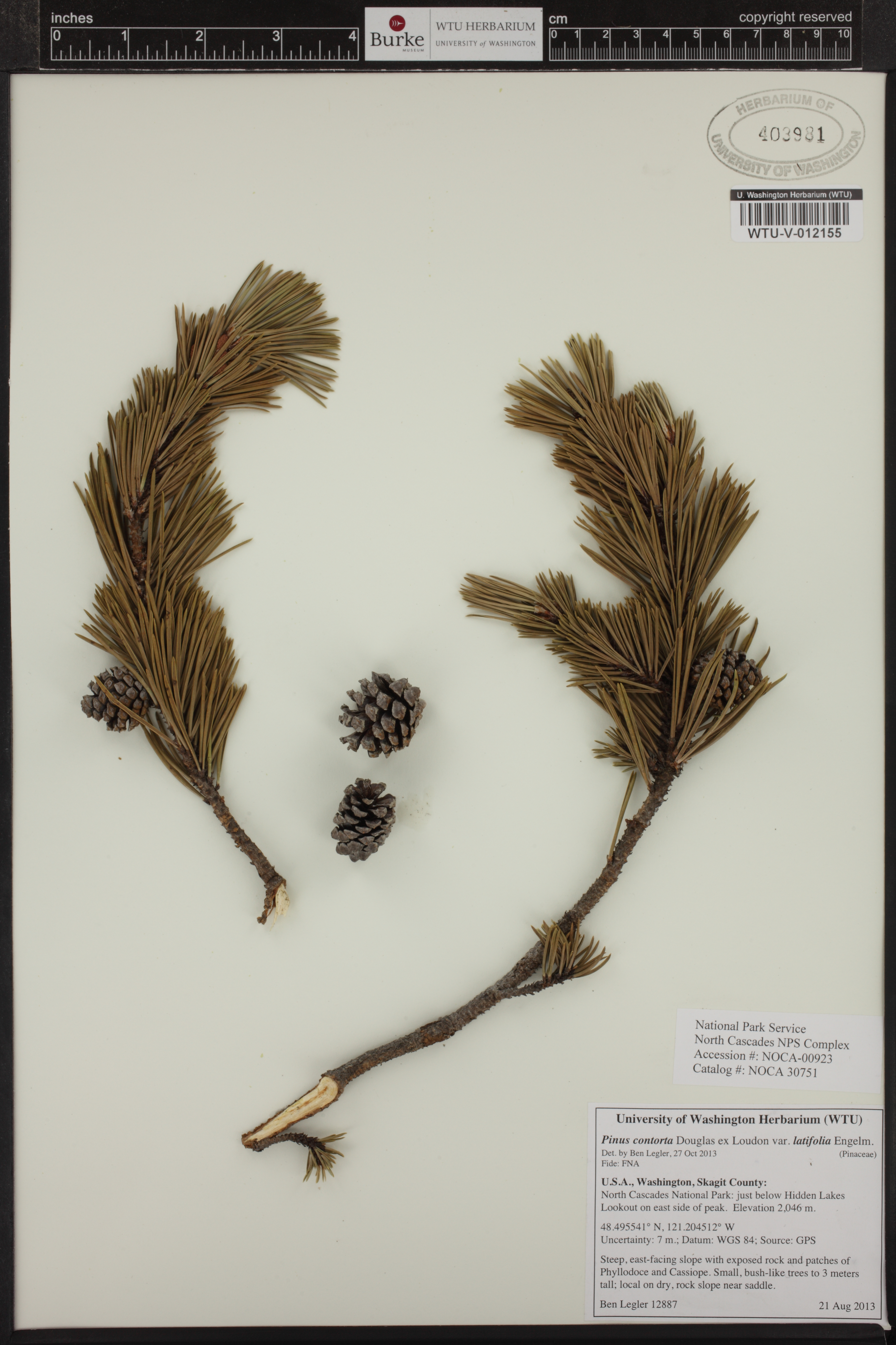 Collections Database | Burke Museum