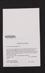 Crocynia pyxinoides image