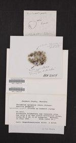 Thrombium epigaeum image
