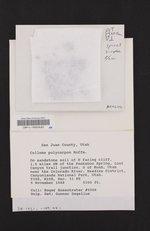 Enchylium polycarpon image