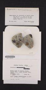 Protoparmeliopsis garovaglii image