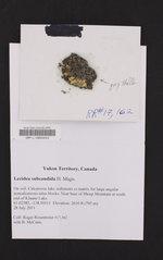 Image of Lecidea subcandida