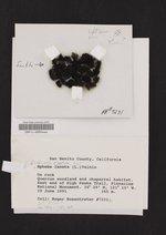 Lichinella stipatula image