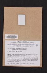 Image of Niebla limicola