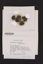 Moelleropsis nebulosa image