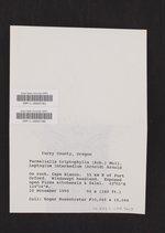 Parmeliella triptophylla image