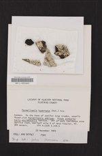 Parmeliopsis hyperopta image