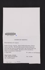 Heterodermia tropica image