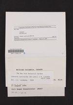 Lepraria caesioalba image