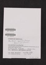 Enchylium coccophorum image