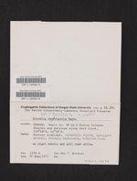 Rinodina terrestris image