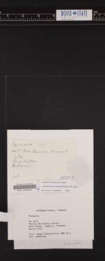 Rockefellera crossophylla image