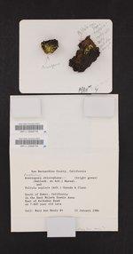 Pleopsidium chlorophanum image