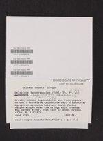 Leptochidium albociliatum image