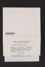Aspicilia aquatica image