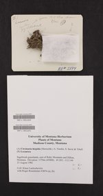 Circinaria hispida image