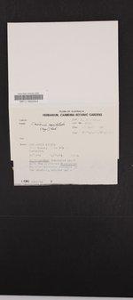 Image of Cladonia capitellata