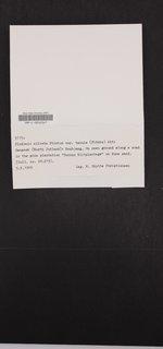 Cladonia ciliata image