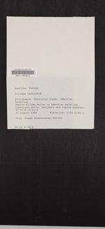 Lathagrium undulatum image