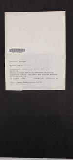 Bilimbia lobulata image