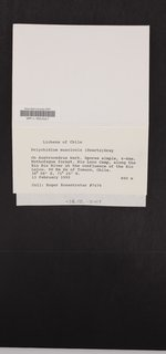 Polychidium muscicola image