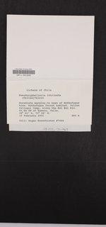 Pseudocyphellaria intricata image
