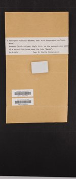 Bogoriella confluens image