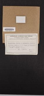Aspicilia desertorum image