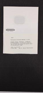 Wahlenbergiella striatula image